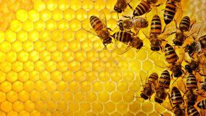 عسل داروی شفا بخش - عسل خوانسار