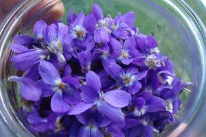 گل بنفشه - گیاهان دارویی - دمنوش - درمان گیاهی